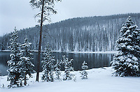 USA Wyoming Yellowstone National Park Snow covered forest beside lake