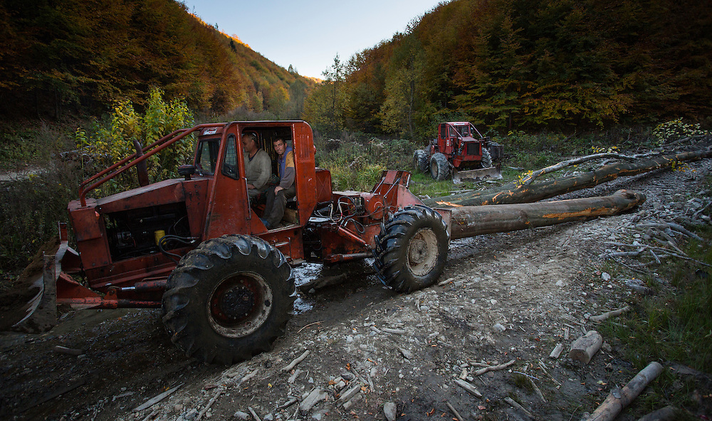 Articulated Forest Tractor (TAF) pulling cut Common beech (Fagus sylvatica) logs. Southern Carpathians, Mehadia, Caras Severin, Romania.