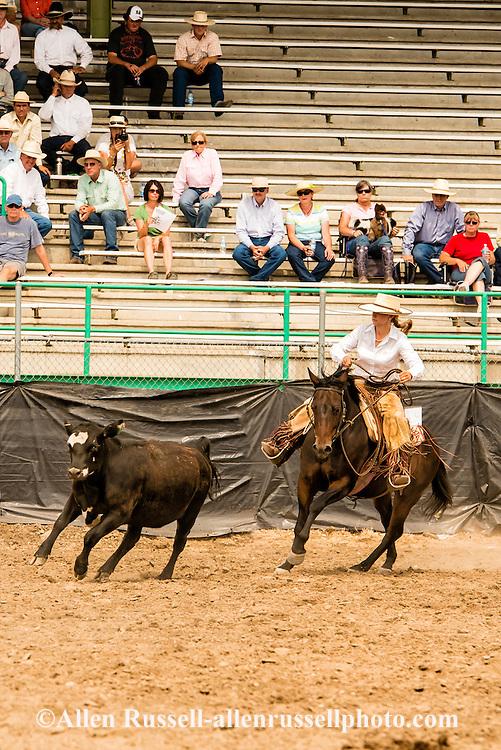 Will James Roundup, Ranch Rodeo, Working Ranch Horse, Hardin, Montana, Reata Brannaman.