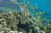 underwater photography,ocean,wildlife,photo.