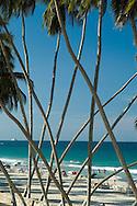 Cocoteros de la playa El agua. Este es uno de los sitios más famosos y concurridos de la Isla de Margarita. 2005. (Ramón Lepage / Orinoquiaphoto)  Coco-palms of the beach El Agua. This one is one of the most famous and crowded places of Margarita's Island. 2005. (Ramon Lepage / Orinoquiaphoto)