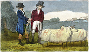 Farmers discussing Dishley (New Leicester) sheep. Breed result of selective breeding programme carried out by Robert Bakewell (1725-1795) on farm at Dishley, Leicestershire. Engraving London 1822