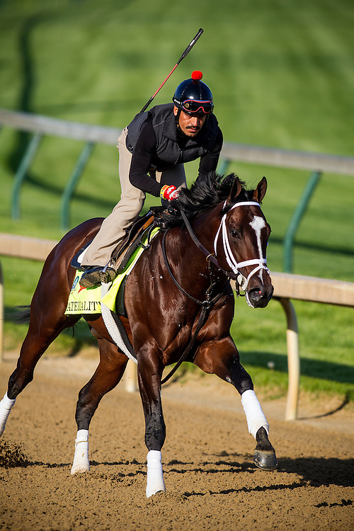 April 29, 2015: Materiality gallops in preparation for the Kentucky Derby at Churchill Downs Louisville Ky. Alex Evers/ESW/CSM