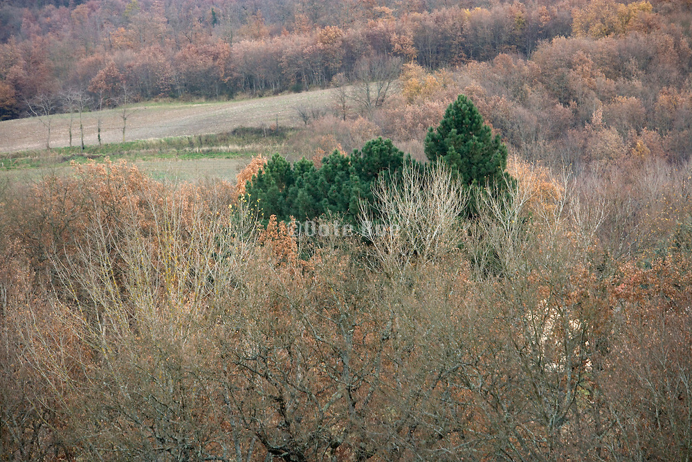 deciduous tree tops with some non native green pine trees signaling where a house is standing