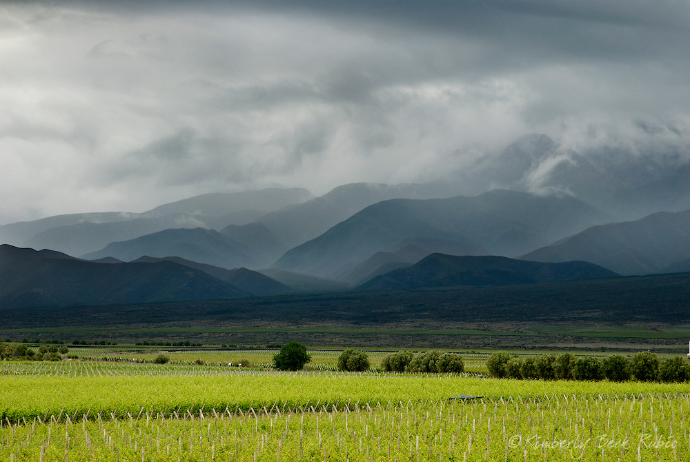 Stormy sky over a vineyard in Mendoza, Argentina, with Andean foothills in the background.