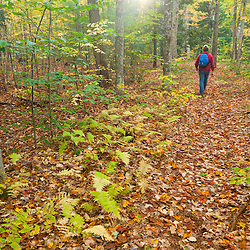 A hiker on a woodland trail in New Hampshire's White Mountains.  Albany, New Hampshire. Fall.