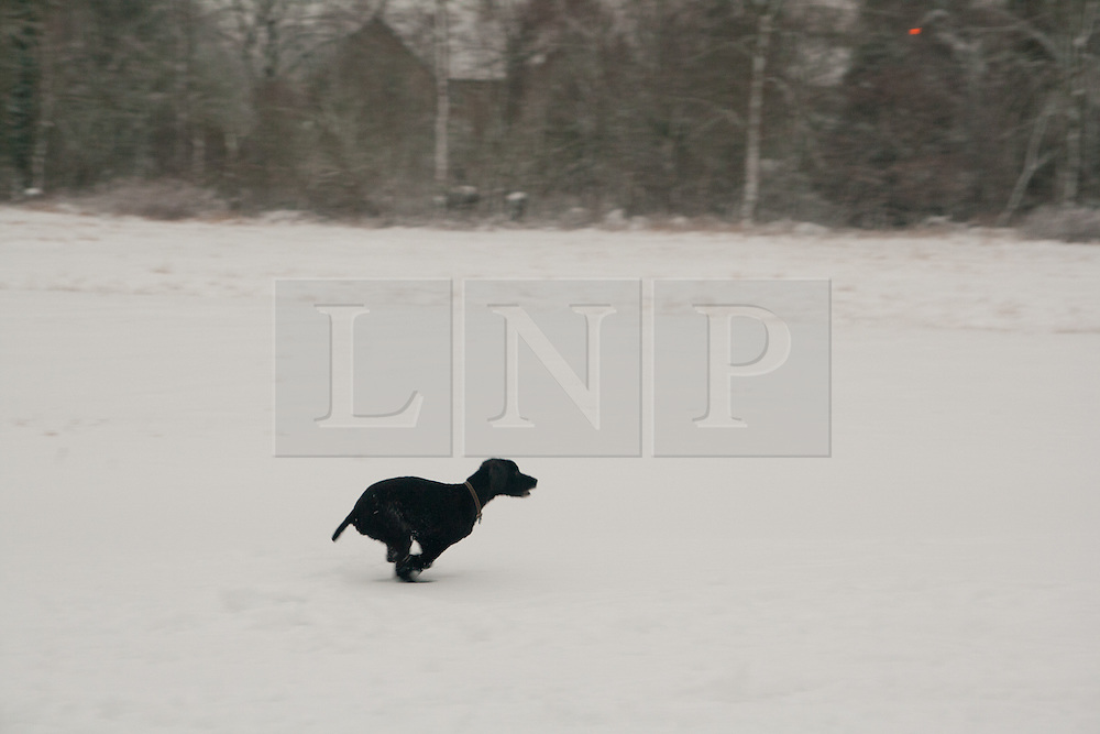 © under license to London News Pictures. 14/11/2010. Dog runs in the snow in Huntingdon Cambridgeshire. Photo credit : Jason Patel/LNP