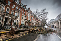 © Licensed to London News Pictures. 09/02/2020. London, UK. A tree comes down in high winds in Buckingham Palace Road opposite Victoria station. All 8 Royal Parks have closed their gates to the public due to Storm Ciara as weather experts predict stormy weather with very high winds and heavy rain for Sunday. Photo credit: Alex Lentati/LNP