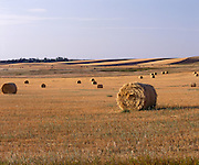 BB02960-01...NORTH DAKOTA - Grain field near Fairfield.