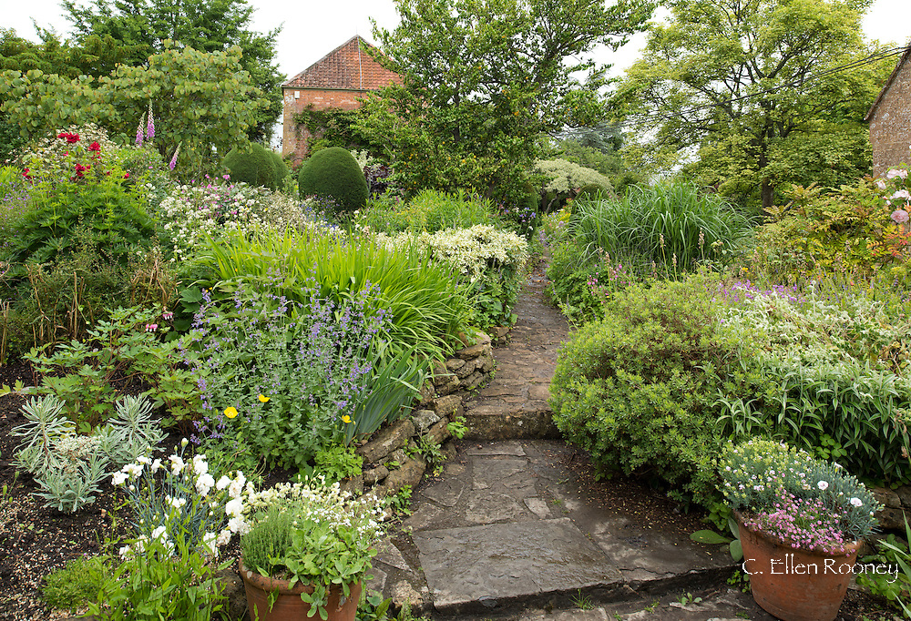 A stone path through densely planted borders in the Terrace Garden at East Lambrook Manor Gardens, South Petherton, Ilminster, Somerset, UK