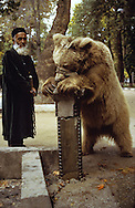 tame bear as an attraction