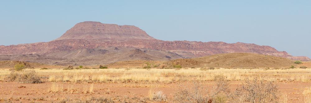 Desert adapted elephants roam the dry valleys of the mountainous Damaramland region, Twyfelfontein, Namibia.
