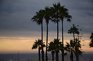 Santa Monica Beach sunset where Bicknell Ave and the sand meet with palm trees reaching to the sky. Santa Monica, CA 8.3.14