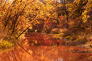Autumn along the Seine River<br />Winnipeg<br />Manitoba<br />Canada