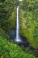 Akaka Falls on the Big Island of Hawai'i