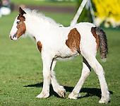 June 5 - The foals