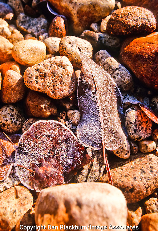 Frosted Leaves and Rocks in Winter on a Stream Bed in Yosemite National Park California