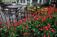 Tulips at the Boathouse restaurant in Central Park