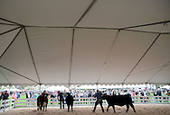 Participants compete in the livestock competition during A Day at Del Val University Saturday April 23, 2016 in Doylestown, Pennsylvania. (Photo by William Thomas Cain)