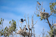 A Snake River Heron Rookery