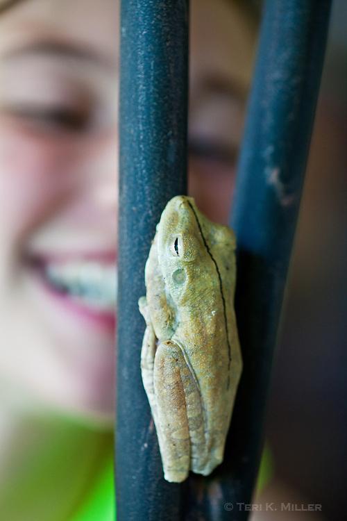 A girl spots a frog on a fence at Arenas del Mar Resort, Manuel Antonio, Costa Rica