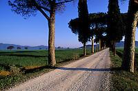 Italie, Toscane, Region de Grosseto, paysage de cypres et pin parasol // Italy, Tuscany, Grosseto, province, landscape
