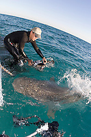 Eric Cheng photographs sharks in the Bahamas