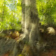 Abstract Birch tree scenery with fresh green leaves