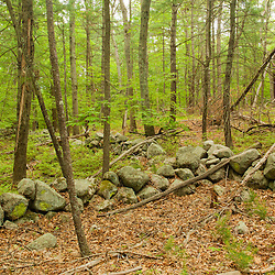 Stone walls in the forest at a Wildlands Trust preserve in Brockton, Massachusetts.