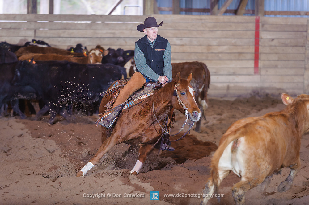 April 30 2017 - Minshall Farm Cutting 2, held at Minshall Farms, Hillsburgh Ontario. The event was put on by the Ontario Cutting Horse Association. Riding in the Non-Pro Class is Scott Reed on LL Crockett Rocket owned by the rider.
