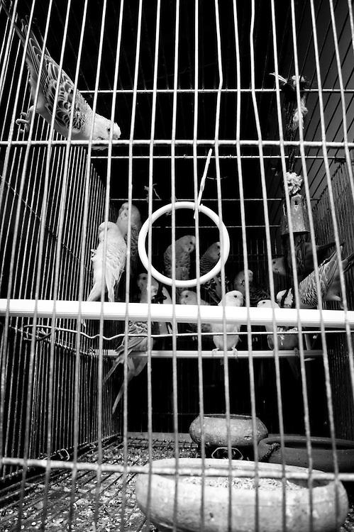 Caracas - Venezuela 2011<br /> Photography by Aaron Sosa