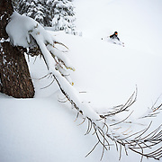 Tyler Hatcher makes a turn near the lacy branches of a fir tree in the backcountry off of Mount Baker Ski Area.