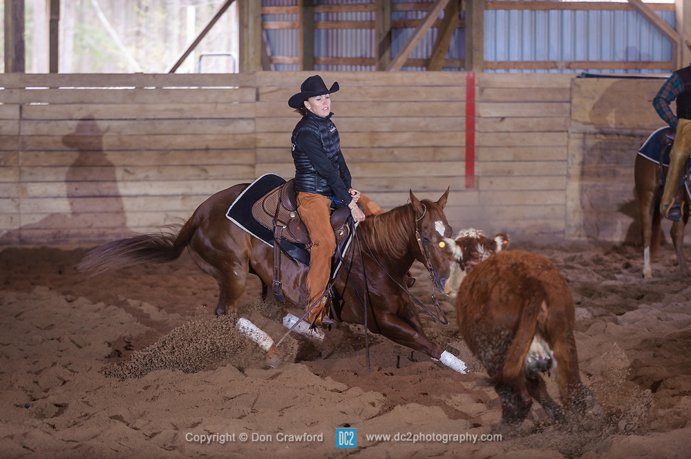 April 29 2017 - Minshall Farm Cutting 1, held at Minshall Farms, Hillsburgh Ontario. The event was put on by the Ontario Cutting Horse Association. Riding in the 25,000 Novice Horse Non-Pro Class is Katherine Van Boekle on Love That Dog owned by the rider.