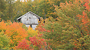 This little old shed in Grand Marais Michigan is nestled into a variety of colorful hardwoods.