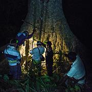 Honey hunters checking ladder before start their claim to harvest honey.