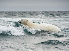 Svalbard #30 2016