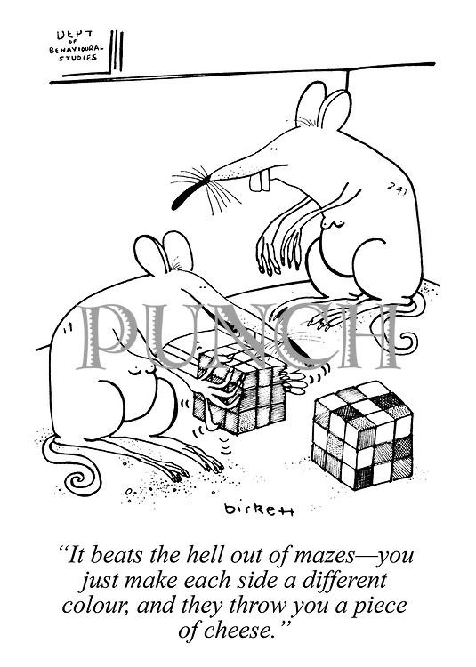 """""""It beats the hell out of mazes - you just make each side a different colour, and they throw you a piece of cheese."""""""