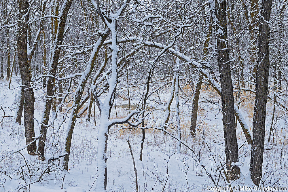 Seine River Forest in winter.<br />