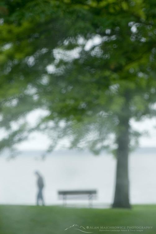 Single person walking through waterfront park in the rain, Bellingham Washington