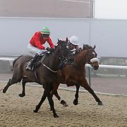 Lingfield 16th January 2013