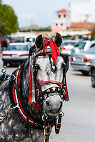 Aegina is one of the Saronic Islands of Greece in the Saronic Gulf. Horse cab.
