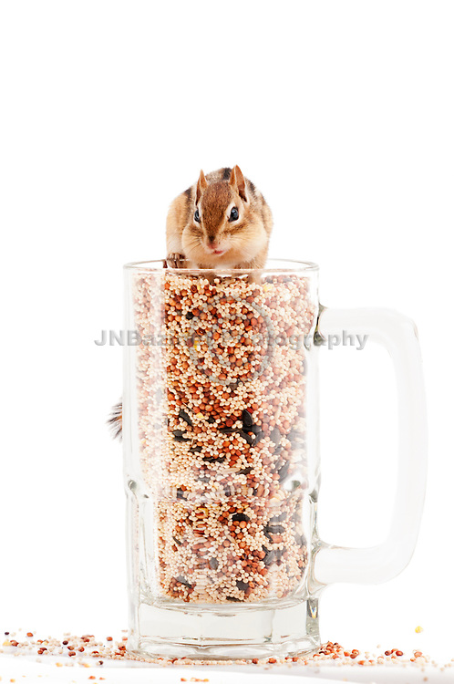 Chipmunk appears victorious having reached top of seed in a glass mug.