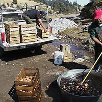 Zinacantepec, M&eacute;x.- Productores de papa en la comunidad de la Joya a faldas del volcan Xinantecatl lavan papas infectadas con plaga para ser utilizadas como semilla en las proximas cosechas. Agencia MVT / Hernan Vazquez E. (DIGITAL)<br /> <br /> NO ARCHIVAR - NO ARCHIVE