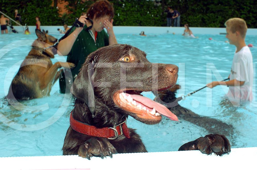 060902, de krim, ned,<br /> In het Krimse zwembad was zaterdagmorgen het evenement zwemmen voor honden met hun baasjes, Foto vinden jullie het ook zo leuk net als ik,<br /> fotografie frank uijlenbroek&copy;2006 michiel van de velde