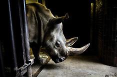 The Last Northern White Rhinos