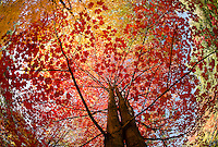 Fall color  ©2015 Karen Bobotas Photographer