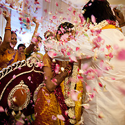The groom gives his wife a gold necklace called Taali as the guests shower them with flower petals.
