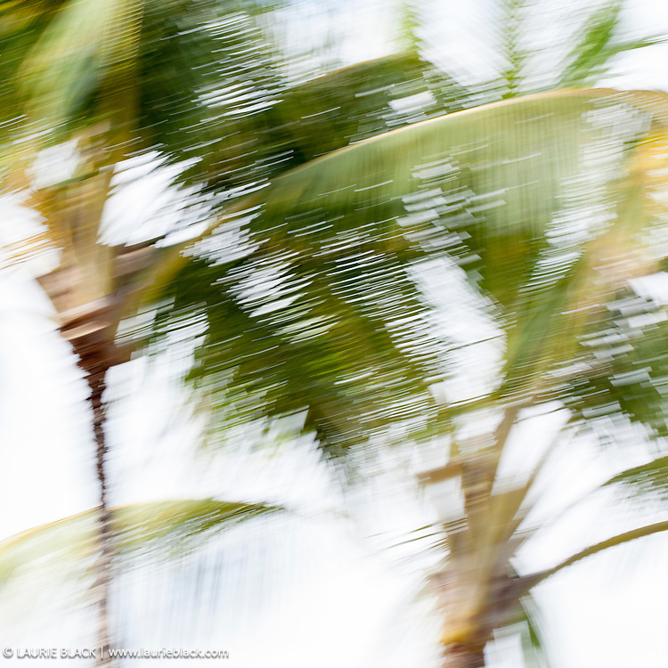 Abstract palms photograph