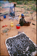 Mopane worms dry in the sun after being cleaned and boiled in salted water. The harvest of mopane worms (dried, they have three times the amount of protein as beef) is a major economic event in Botswana. Whole families move into the countryside and set up camp in order to collect the worms. While mopane worms are eaten in Botswana, they are a coveted form of protein in South Africa as well and have been largely over-harvested there. (page 126)