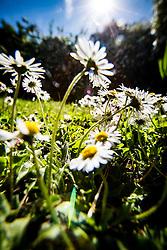 Sunny garden today.